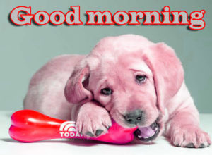 Puppy Good Morning Images wallpaper photo free hd download