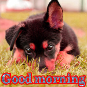 Puppy Good Morning Images pictures pics free hd