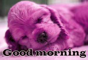 Puppy Good Morning Images photo pictures free hd