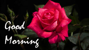 Red Rose Good Morning Images photo pics for girlfriend