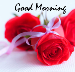 Red Rose Good Morning Images pictures photo hd download