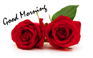 Red Rose Good Morning Images wallpaper pics free download