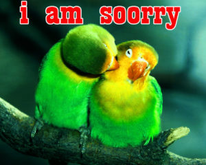 Sorry Images photo pictures free hd