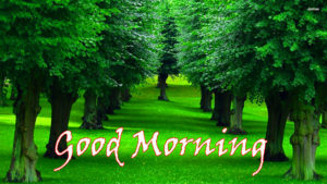 Nature Good Morning Images pictures photo download