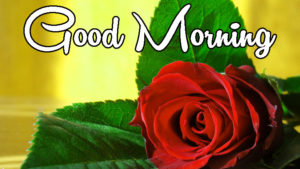 Latest Free Good Morning Wishes Images pictures pics hd