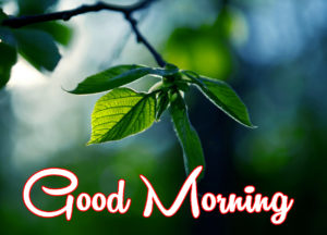 Latest Free Good Morning Wishes Images wallpaper photo hd download