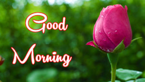Good Morning All images wallpaper pictures photo free hd download