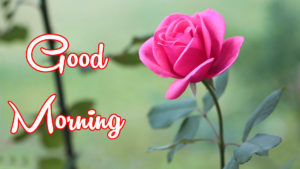 Good Morning All images photo wallpaper hd