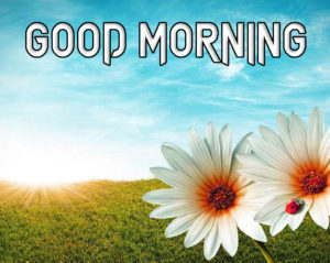 A Very Good Morning Images Wallpaper HD Download