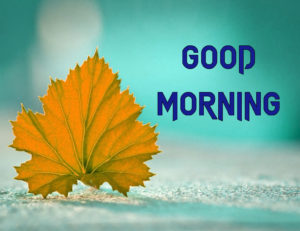 A Very Good Morning Images Pic for Whatsapp With Flower