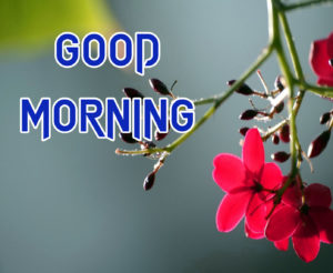 A Very Good Morning Images pics Wallpaper Download