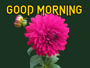 A Very Good Morning Images Wallpaper PIC Download
