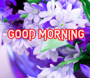 Beautiful Good Morning Images Pics photo Free Download & Share
