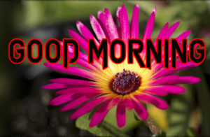 Beautiful Good Morning Images Pics Wallpaper Download