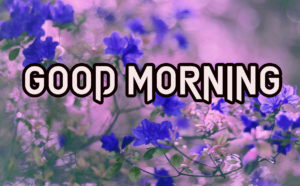 Beautiful Good Morning Images Wallpaper Pics for Facebook