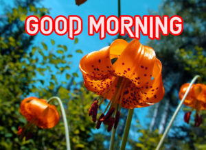 Beautiful Good Morning Images Wallpaper Dow load