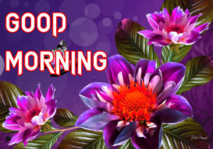 Beautiful Good Morning Images Wallpaper Pics For Him & Her