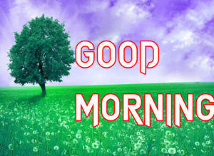 Beautiful Good Morning Images Wallpaper Pics Free Download