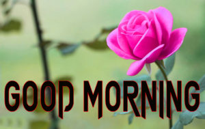 Beautiful Good Morning Images Wallpaper Pictures With Rose