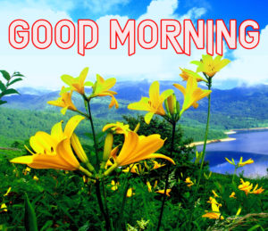 Beautiful Good Morning Images Wallpaper pics Free New Best