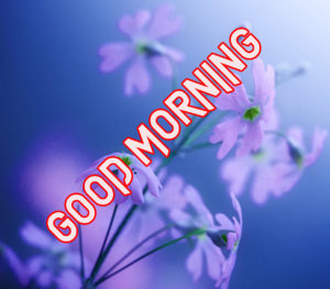 Beautiful Good Morning Images Wallpaper pics Downlaod