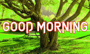 Beautiful Good Morning Images Pictures Wallpaper