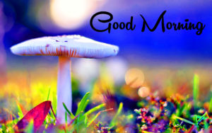 New Good Morning Images wallpaper photo hd