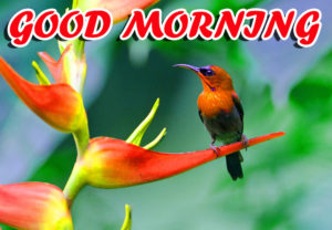 A Very Good Morning Images wallpaper photo download