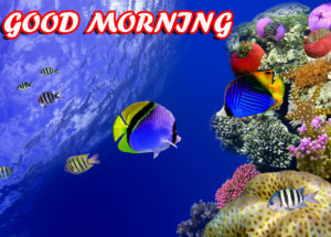 A Very Good Morning Images pics photo pictures free hd