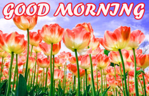 A Very Good Morning Images wallpaper pictures free hd