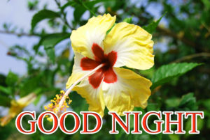 Flower Romantic Good Night Images wallpaper photo download