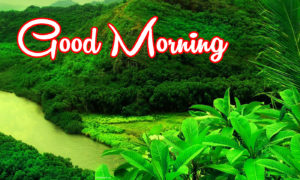 Good Morning Images photo pictures wallpaper free hd