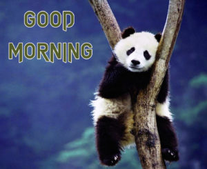 Funny Good Morning Images Wallpaper Pics Download 1286+ Funny Photo