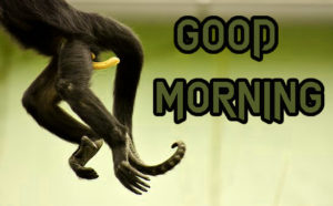 Funny Good Morning Images wallpaper photo for friend