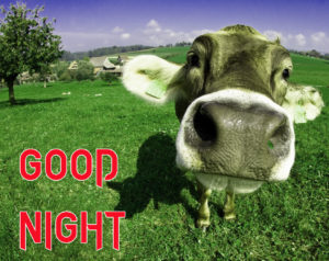 Funny Good Night Images  picture photo download