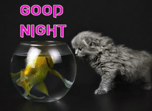Funny Good Night Images  photo pics downloads
