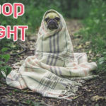 Top 1256+ Funny Good Night Images Wallpaper Photo Pics Download