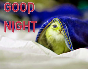 Funny Good Night Images  wallpaper photo download