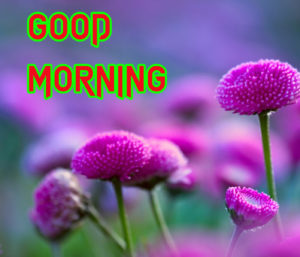 Good Morning All Pics Images wallpaper pics for girlfriend