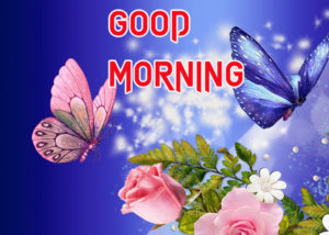 Good Morning All Pics Images photo for whatsapp
