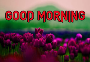 Good Morning All Pics Images photo picture for facebook