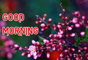 Good Morning All Pics Images picture photo download