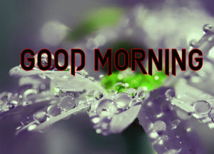 Good Morning All Pics Images wallpaper photo for facebook