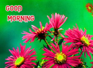 Good Morning All Pics Images photo picture for whatsapp