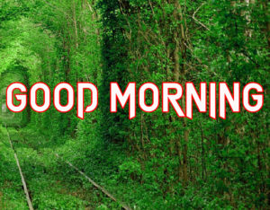 Good Morning All Pics Images pics picture for friend