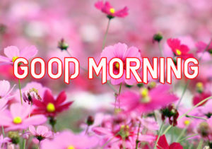 Good Morning All Pics Images pics for best friend