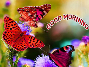 Good Morning All Pics Images wallpaper pictures for girlfriend