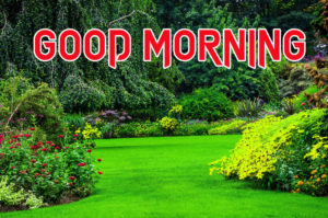 Good Morning All Pics Images picture photo for whatsapp