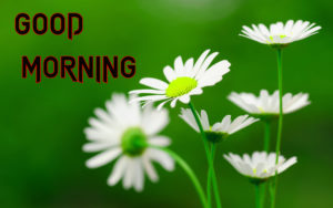 Good Morning All Pics Images wallpaper for girlfriend