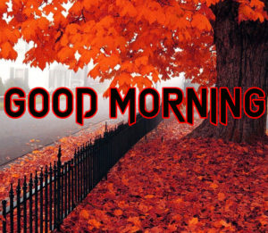 Good Morning All Pics Images wallpaper for whatsapp